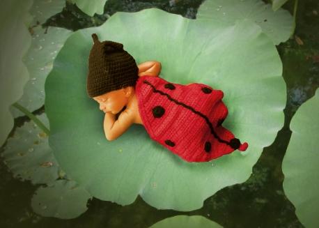 Bug on lotus